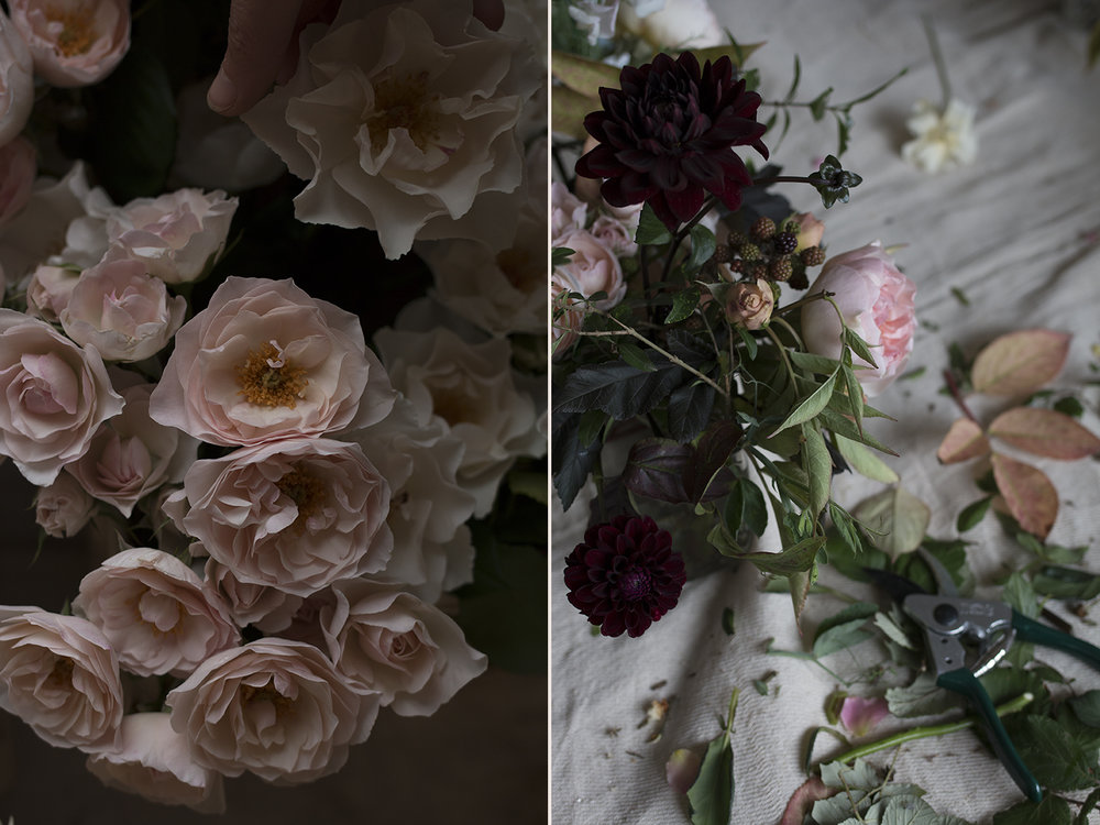English Miss garden roses | Photo by Aesme Flowers
