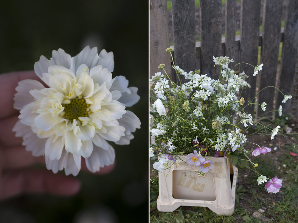 Cutting garden flowers | Photo by Aesme Flowers