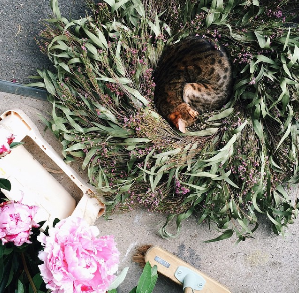 Phoebe in wreath