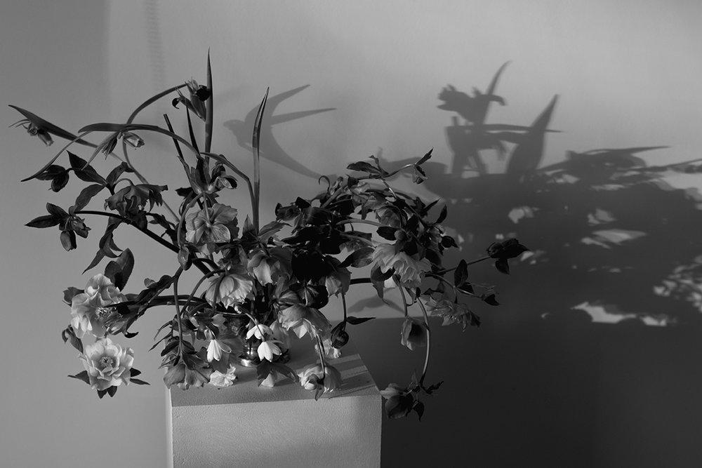 Hellebores | Aesme Flowers London