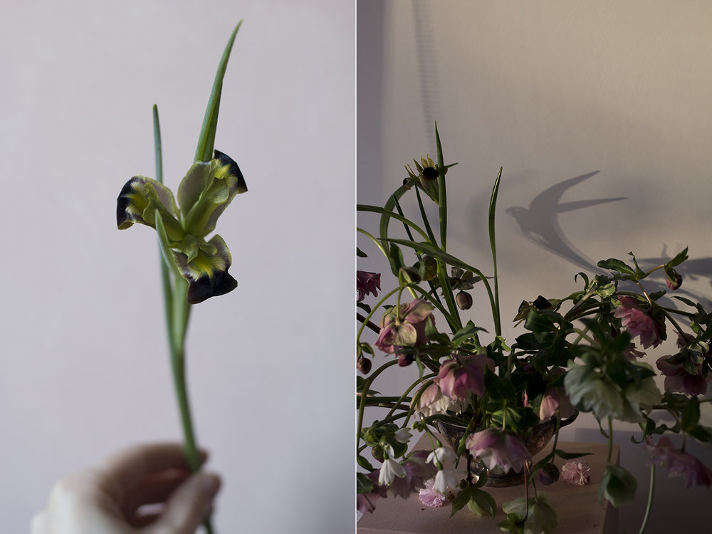 Widow Iris | Aesme Flowers London