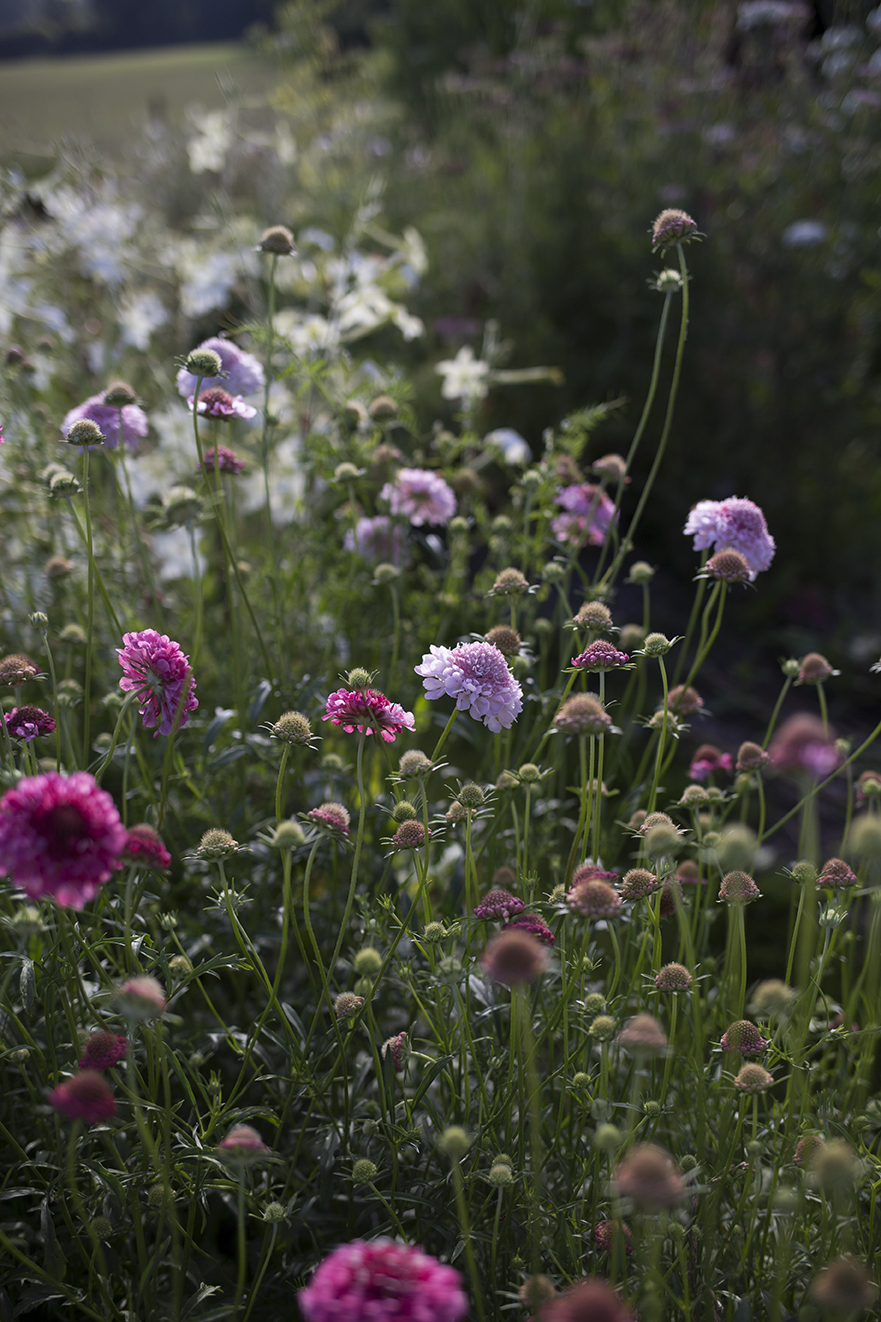 English Cutting Garden Aesme Flowers London