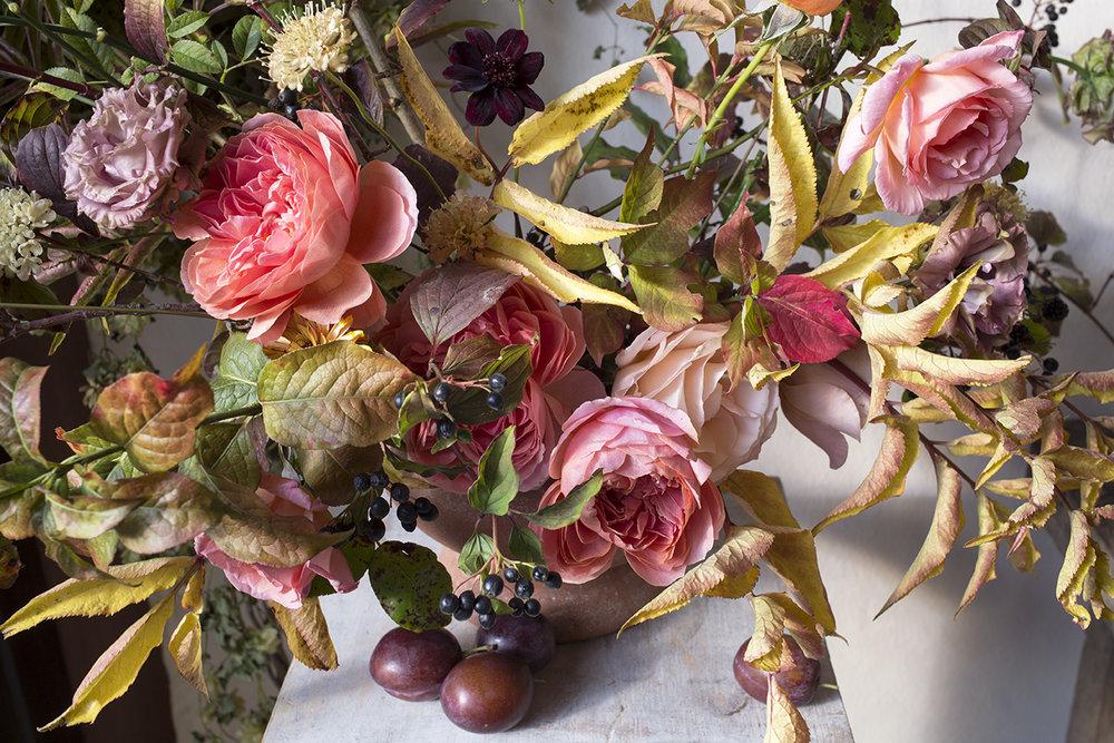 Romantic Antike Garden Roses Aesme Flowers London