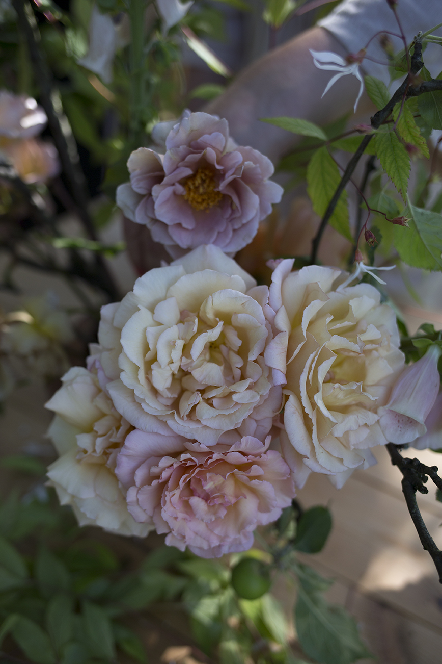 Top: one of our favourite roses, the coffee mousse coloured 'Julia's Rose'.
