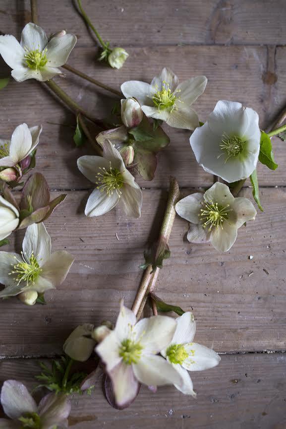 Aesme Flowers | London