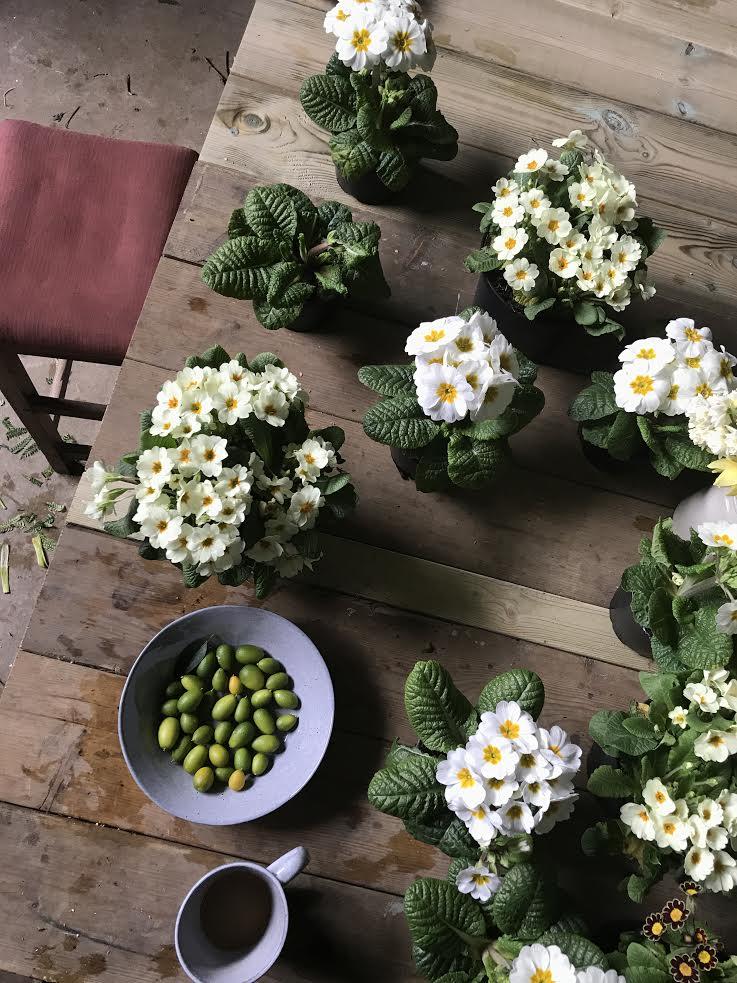 Aesme Flowers London | Spring Plants