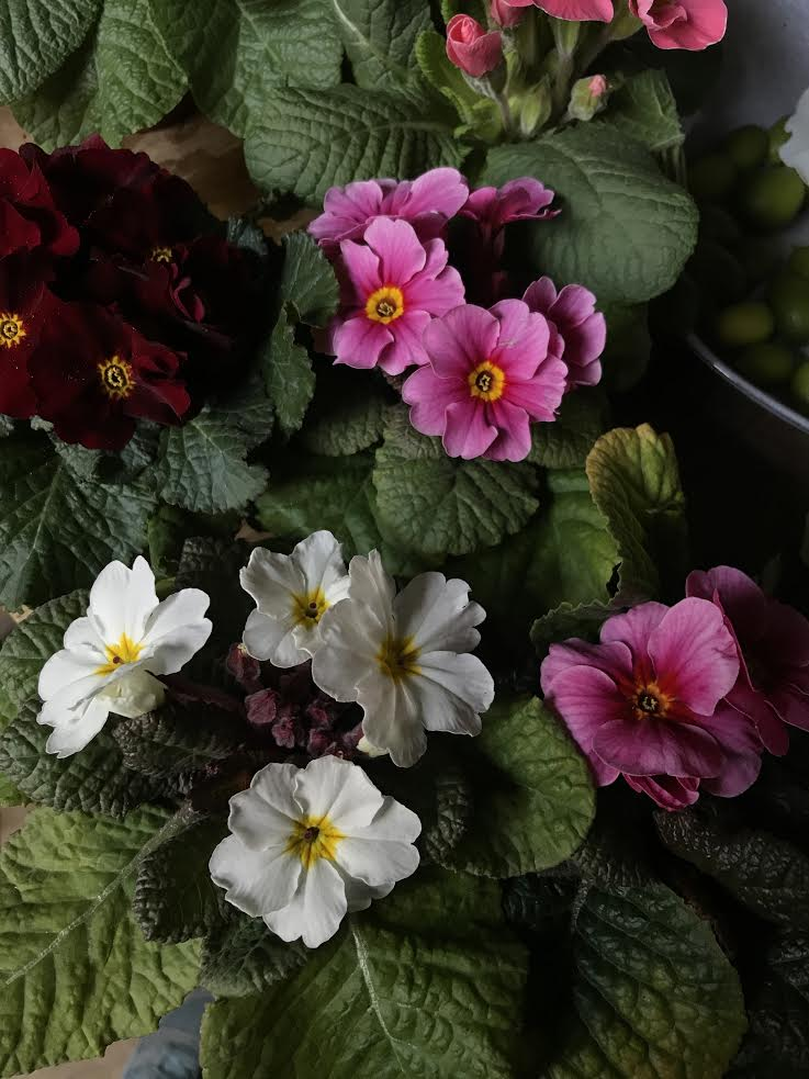 Aesme Flowers London | Spring Flowers Primula