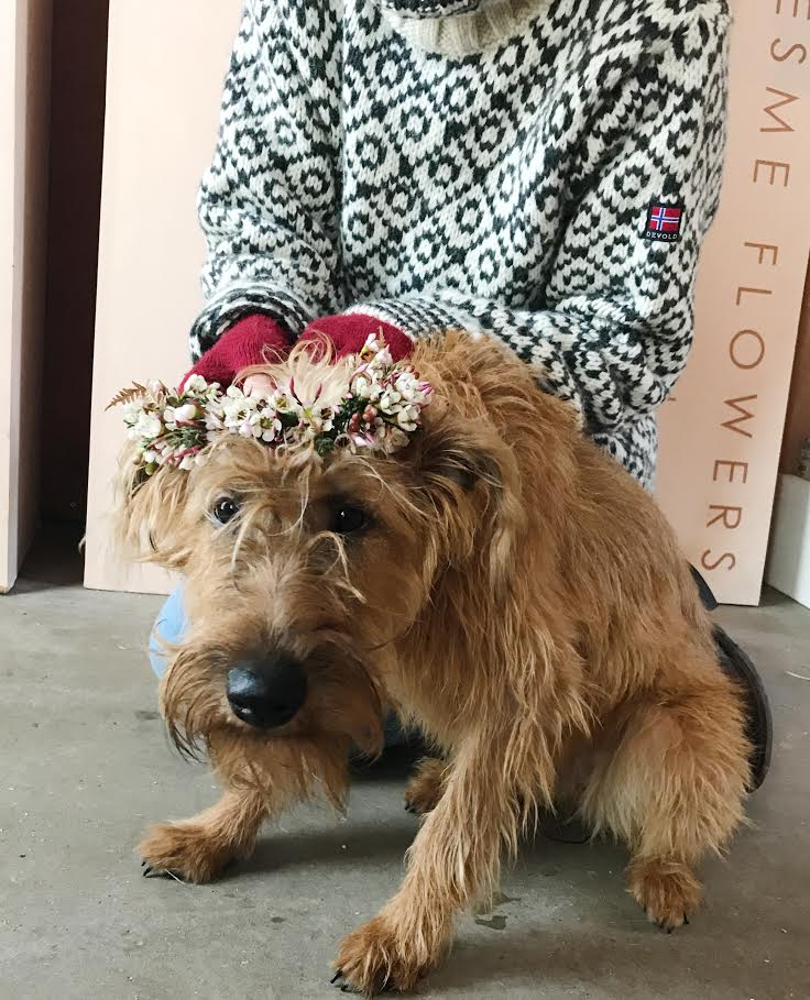 Aesme Flowers London | Irish Terrier