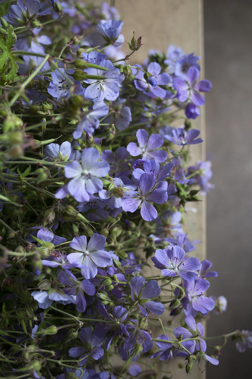 Aesme Flowers London | Geranium