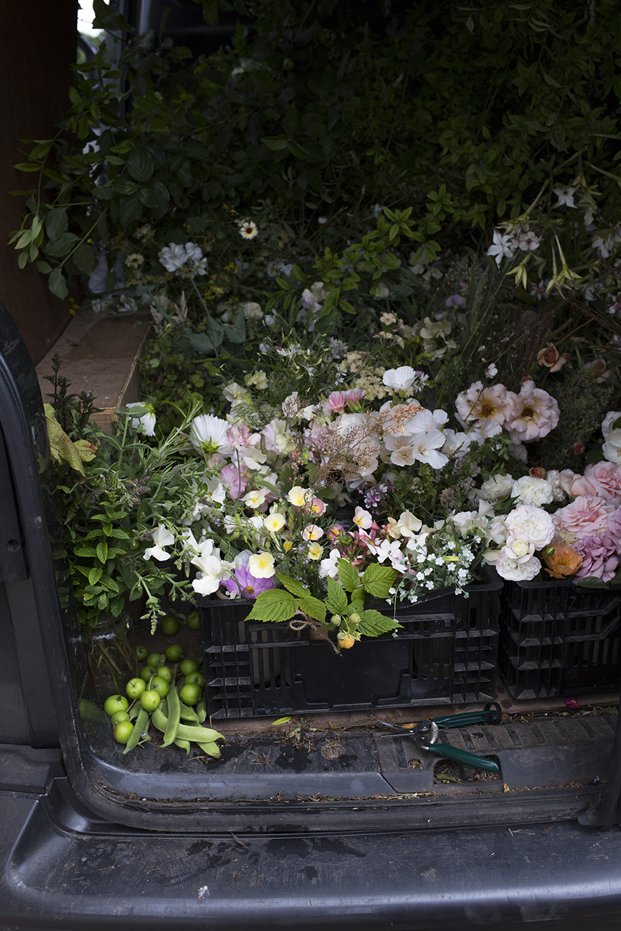A packed van of freshly cut flowers on their way to London for conditioning and arranging in the studio - the beans are grown foremost for their beautiful flowers and then later in the summer for the vegetable harvest