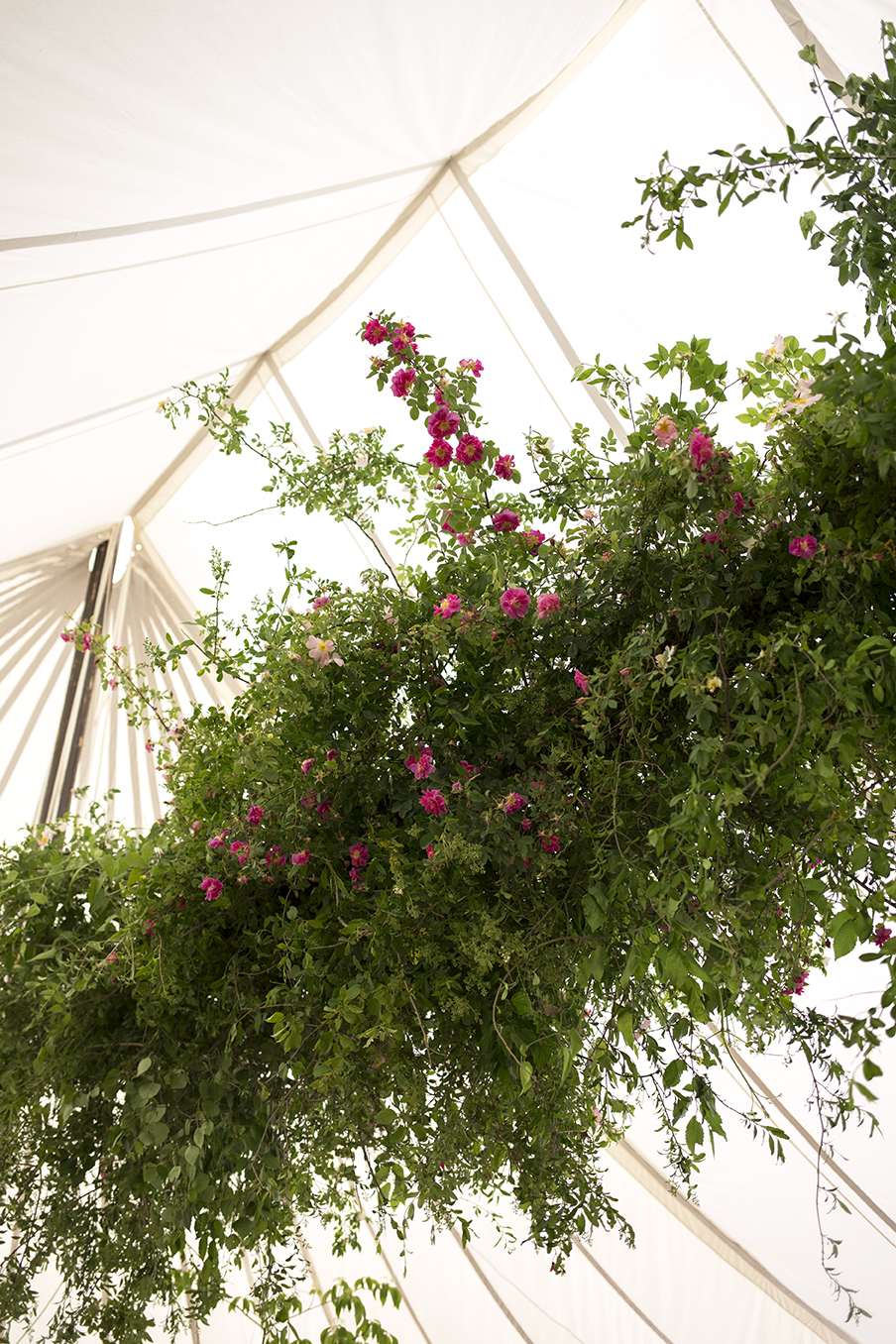 Early June in the Cotswolds. A hanging 20ft installation of English foliage and rambling roses dressed this majestic  LPM Bohemia  canvas tent on the upper lawn of The  Cowley Manor  Hotel in Gloucestershire, suspended high over the dance floor and dining tables. Planning by  Riot Events .