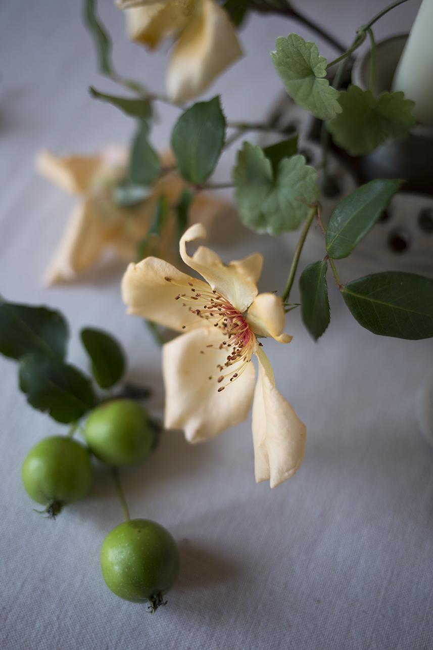 Garden roses at Aesme Flower Studio