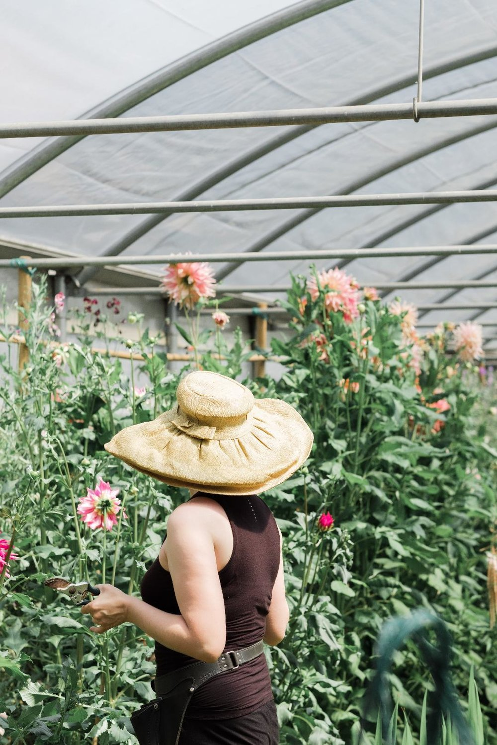Olga is a keen supporter of the seasonal Slow Flower movement and grows a wide variety of unusual, organic flowers at her nursery