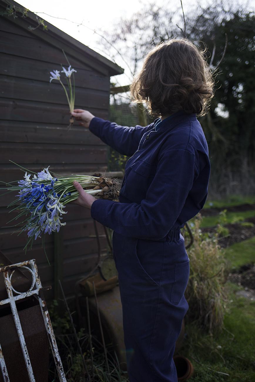 Iris reticulata in flower arrangements | Aesme Studio London