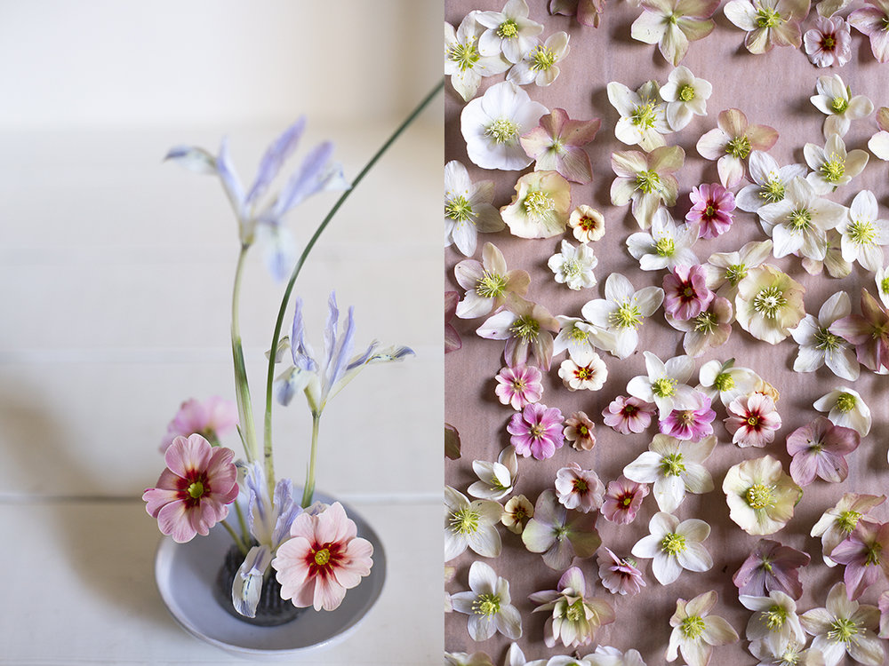 Primrose and iris flower arrangements | Aesme Studio London