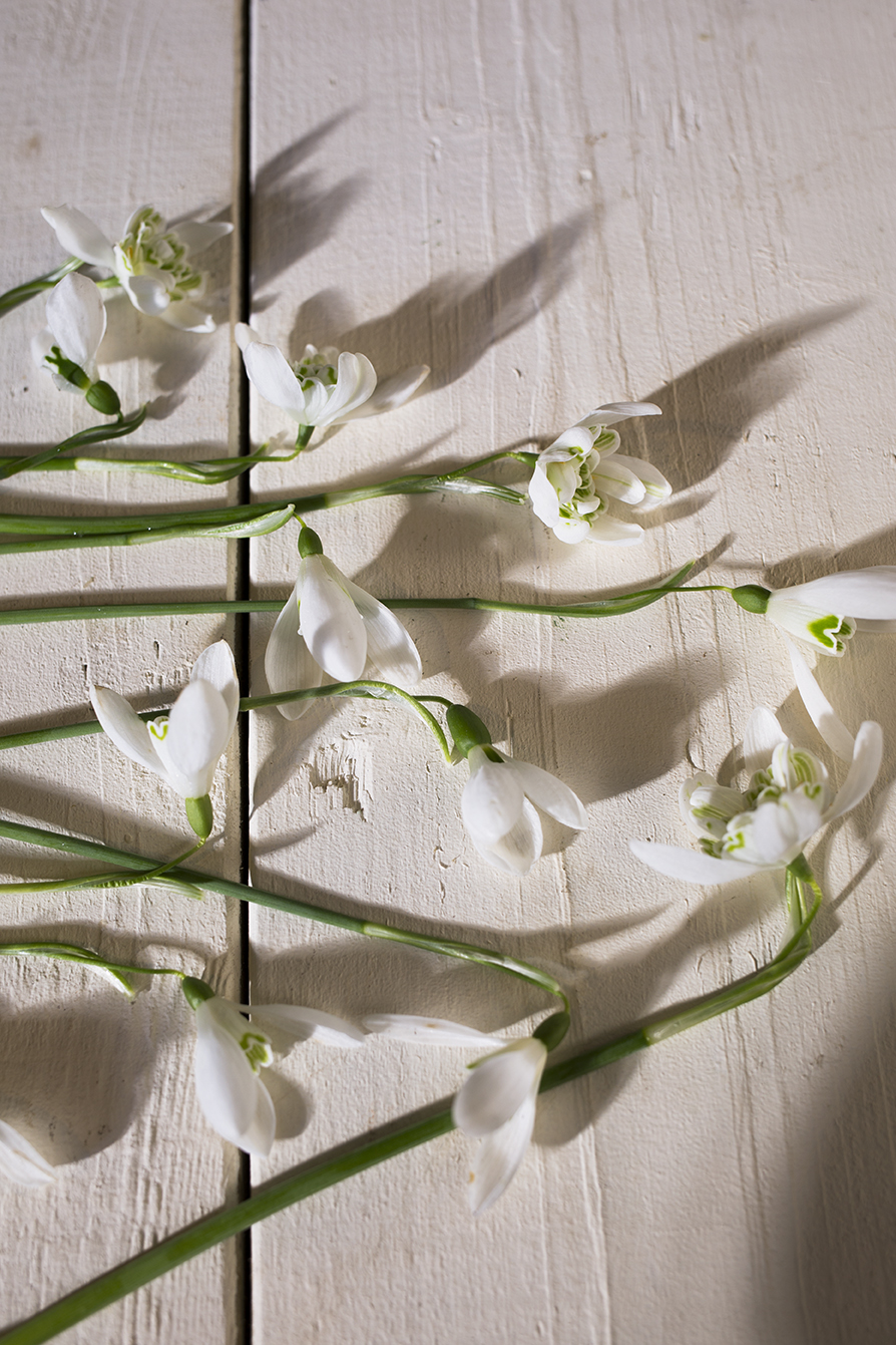 Snowdrop flowers | Aesme Studio London