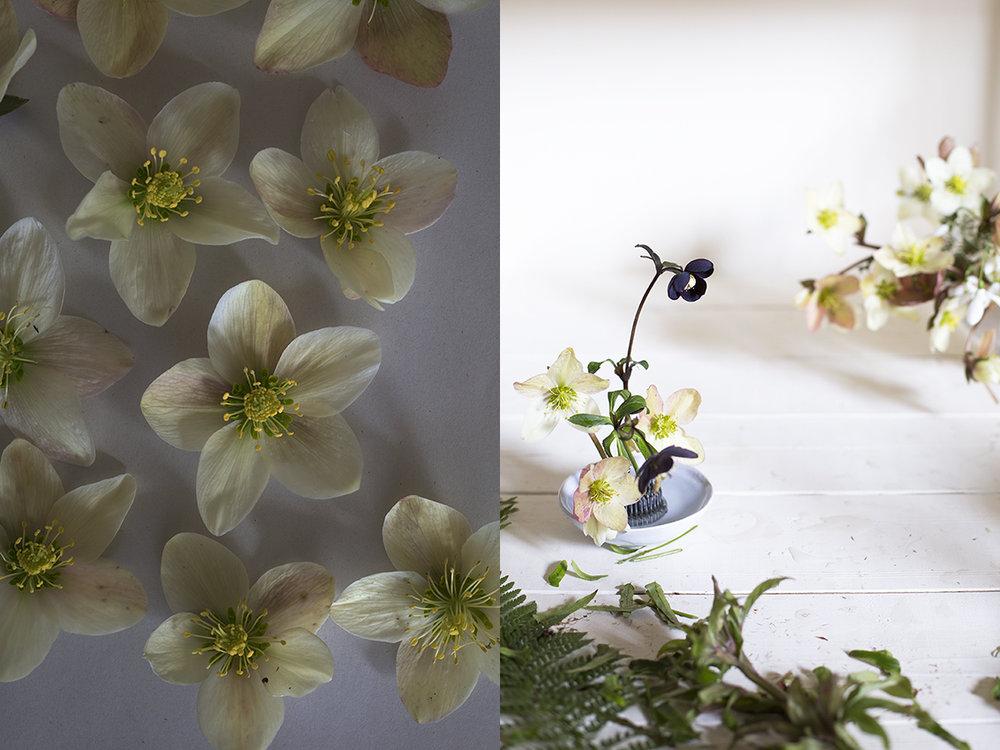 Hellebore flower arrangements | Aesme Studio London