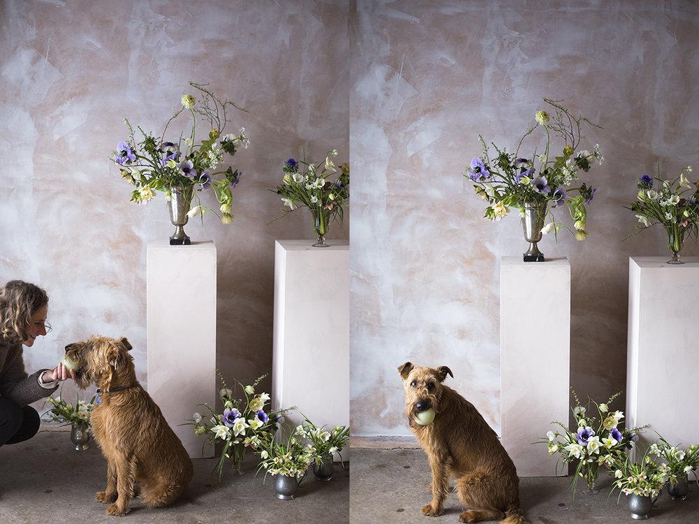 Anemone and ranunculus flower arrangements | Aesme Flower Studio London