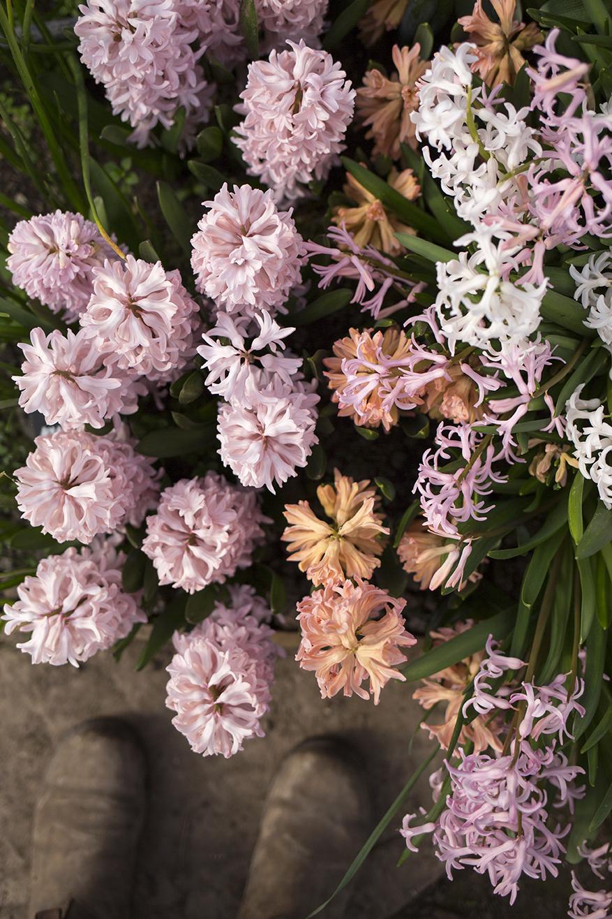 Scented hyacinths | Aesme Flower Studio London
