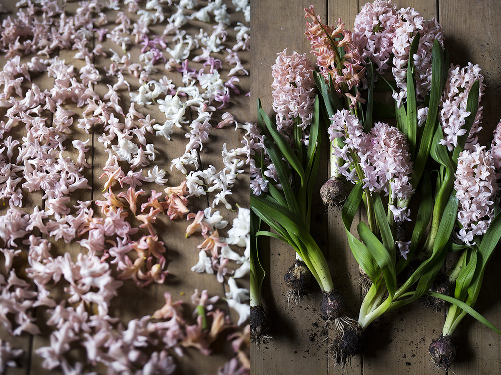 We trialled 'Multiflora White Pearl', 'Gypsy Queen', 'Aiolos', 'Pink Festival' and 'White Festival' hyacinths this year; after a disconcertingly quiet winter they suddenly popped up in the new year and grew very happily in the tunnel.