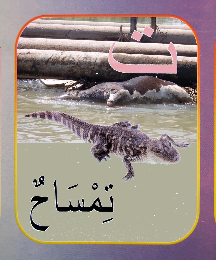 3. alligator flat.jpg