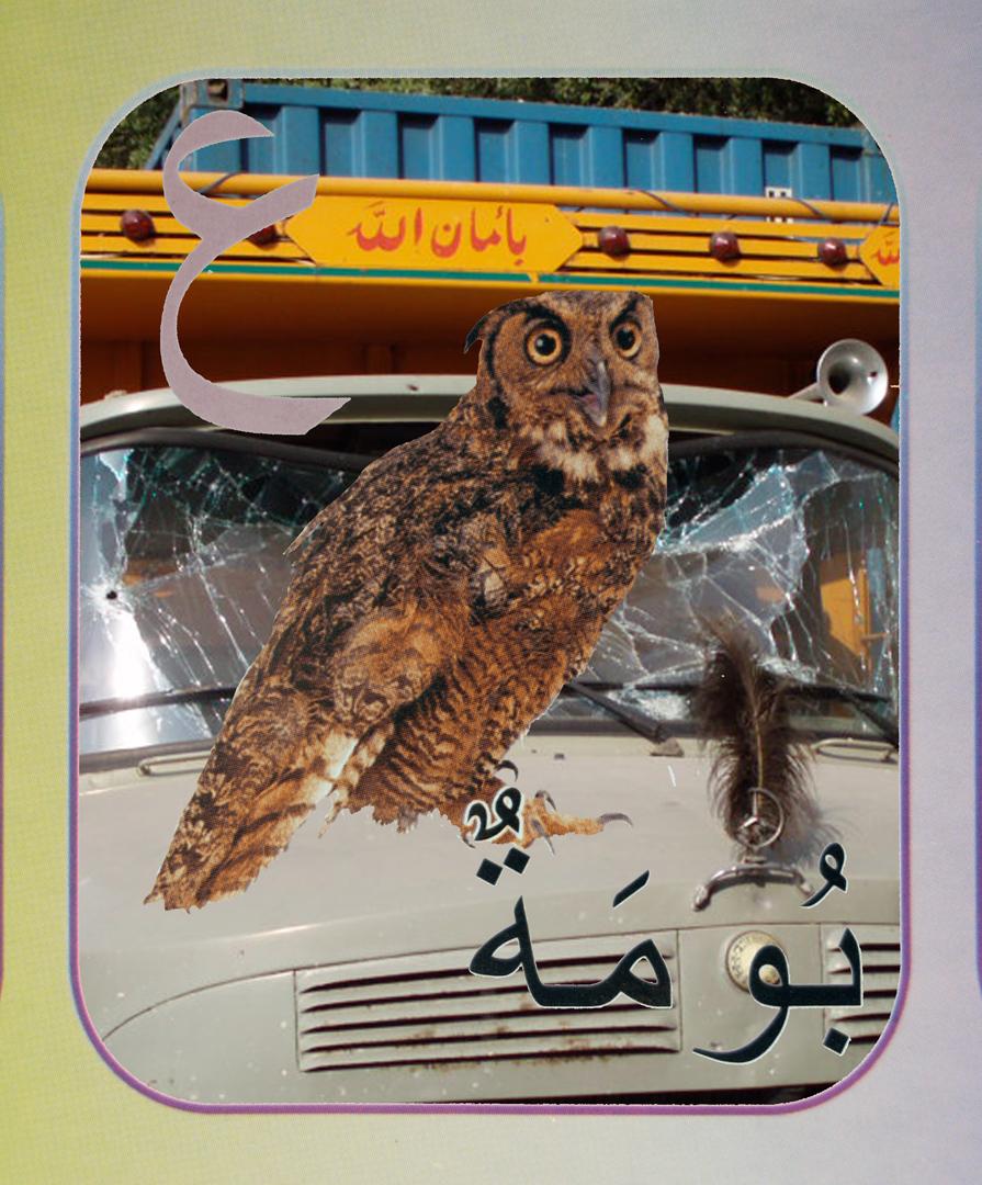 18. owl flat.jpg