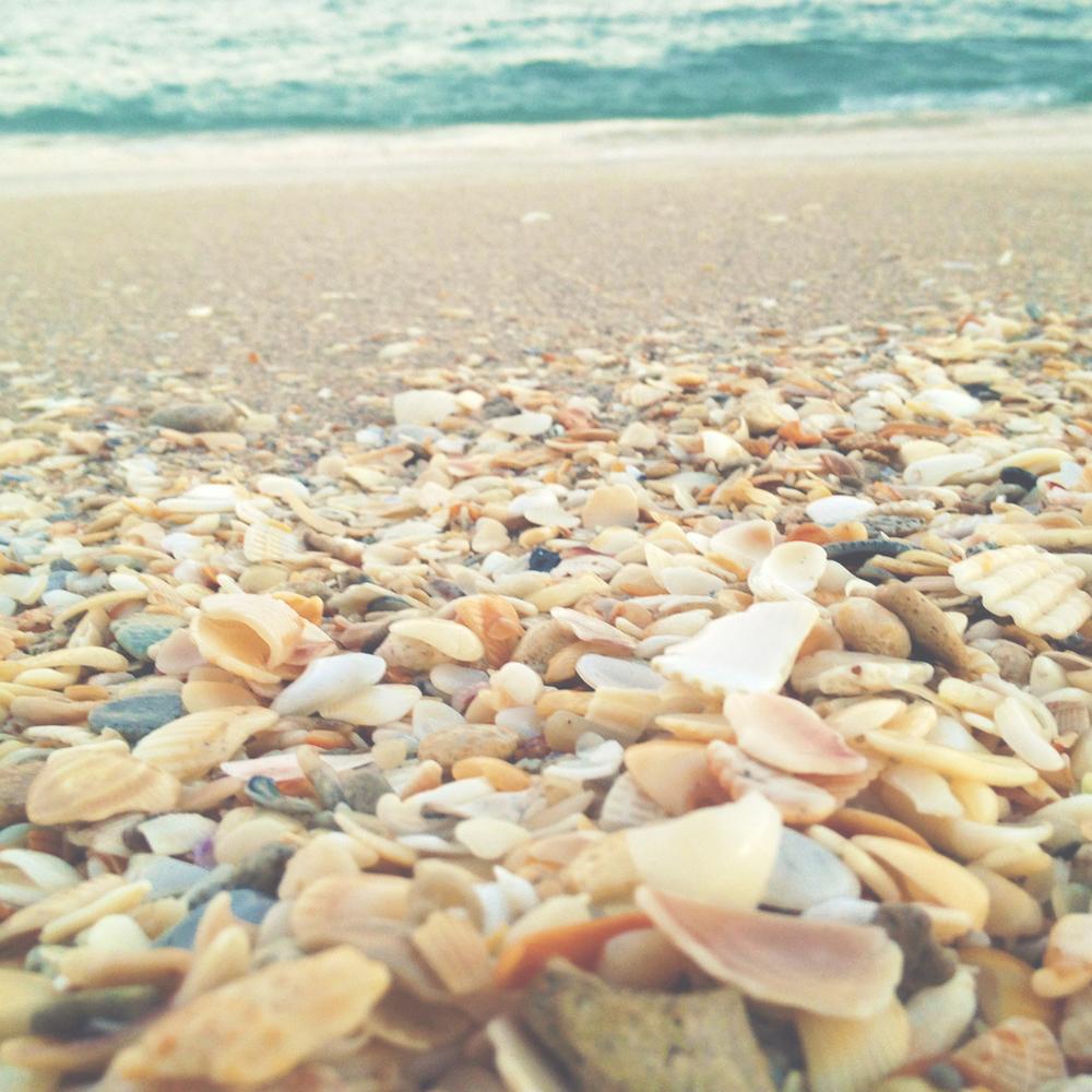 seashells2.jpg