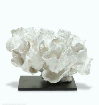 lettuce coral - Copy.JPG