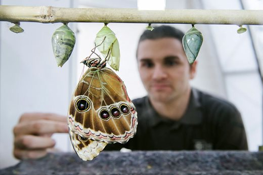 Man-looking-at-butterfly-larvae_940x627.jpg