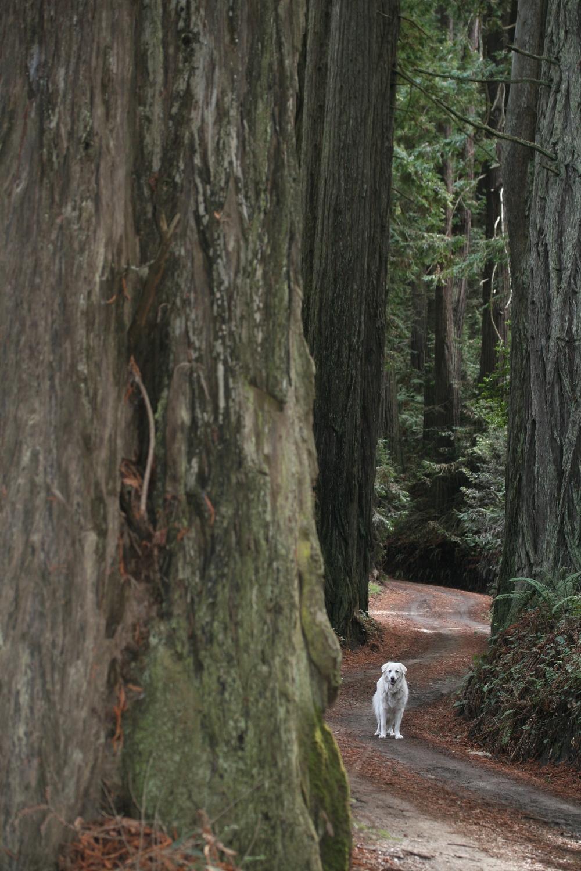 redinwoods.jpg