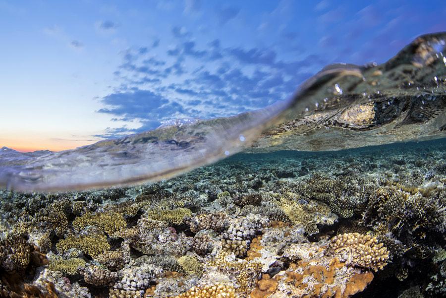 Reef Crest