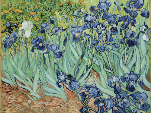 Irises, Saint-Remy , C. 1889, Vincent Van Gogh