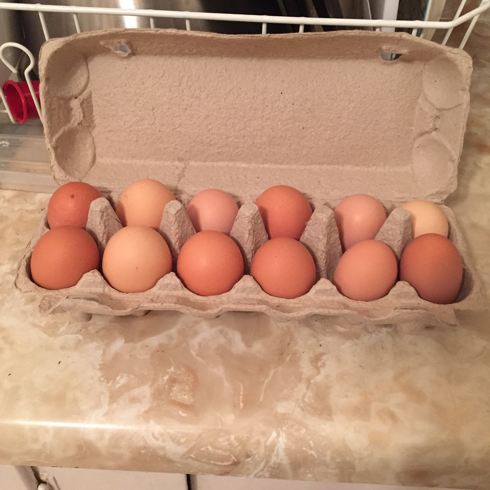 Eggs - $4.50/dozen for large