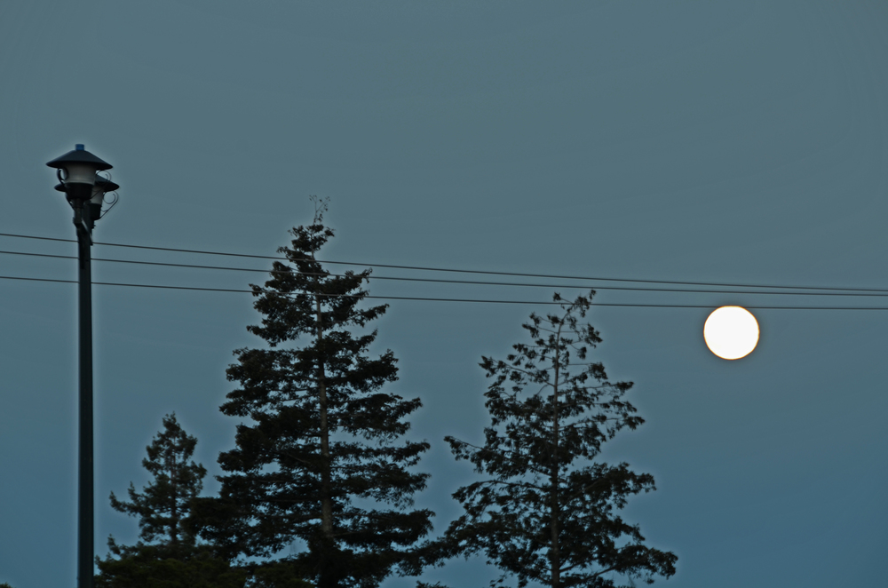 fullmoon_wires_silhouette2.jpg