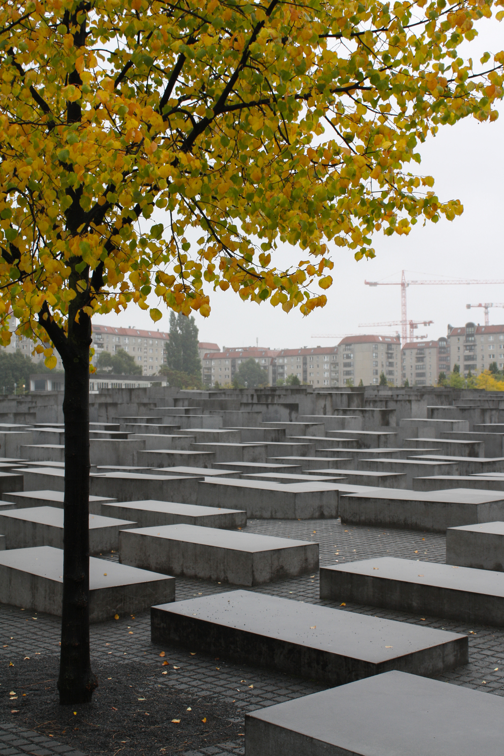 The holocaust memorial, a series of coffin-sized concrete blocks of varying heights.
