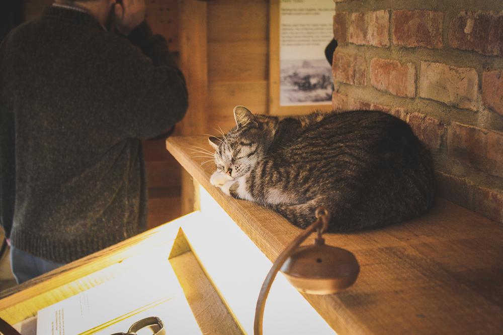 A sleepy cat in the Slavery at Oak Alley exhibit.