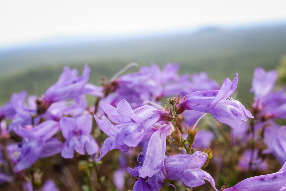 I'm not good at plant names, but I love these wildflowers. We saw them on both visits to the Monument.