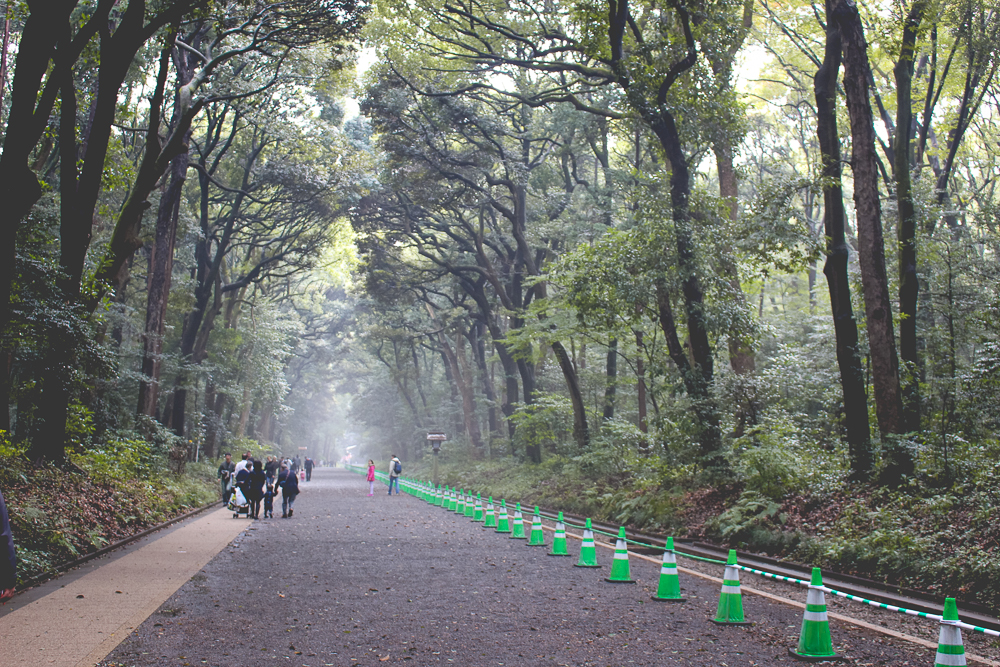 We all fell in love with the misty, evergreen walkway to the center of the shrine. We had to keep reminding ourselves that we were in a forrest, in the middle of a major city!