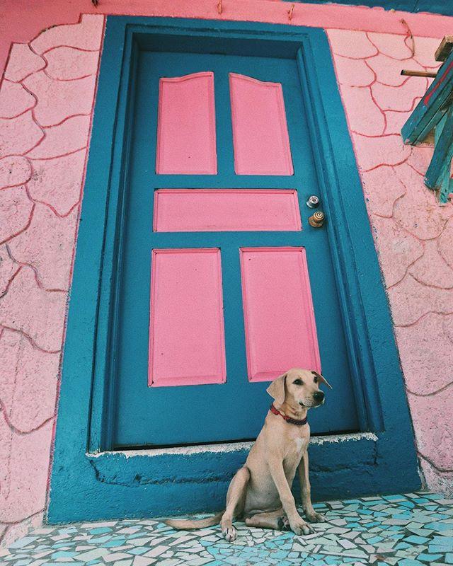Future house. Future dog.