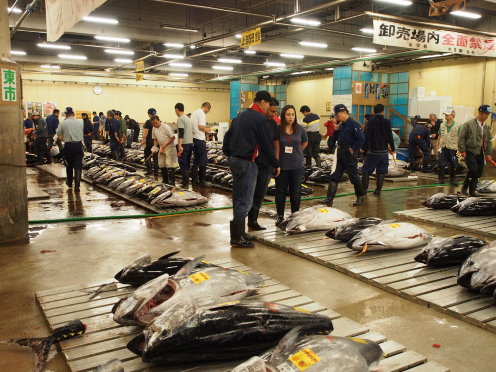 Fresh tuna auction