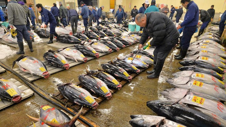 HOW TO ENJOY THE TSUKIJI FISH MARKET