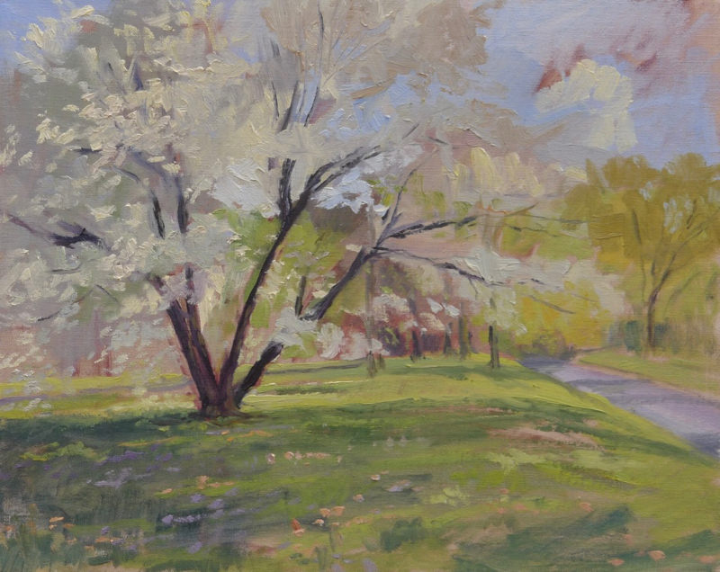 Cherry Trees in Full Bloom- 16x20 Inches