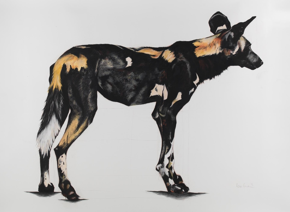 21. LARGE AFRICAN WILD DOG IV