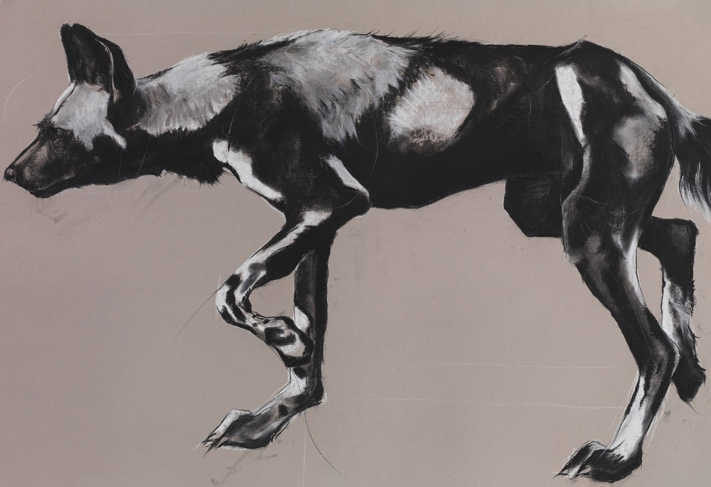 11. WILD DOG ON GREY II