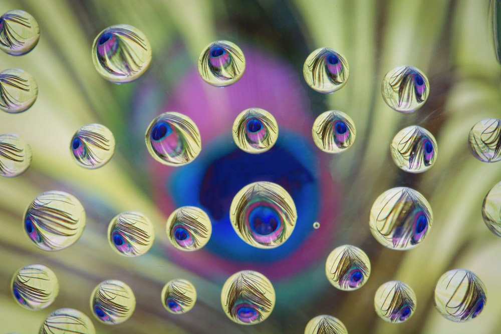 Peacock refraction sm.jpg