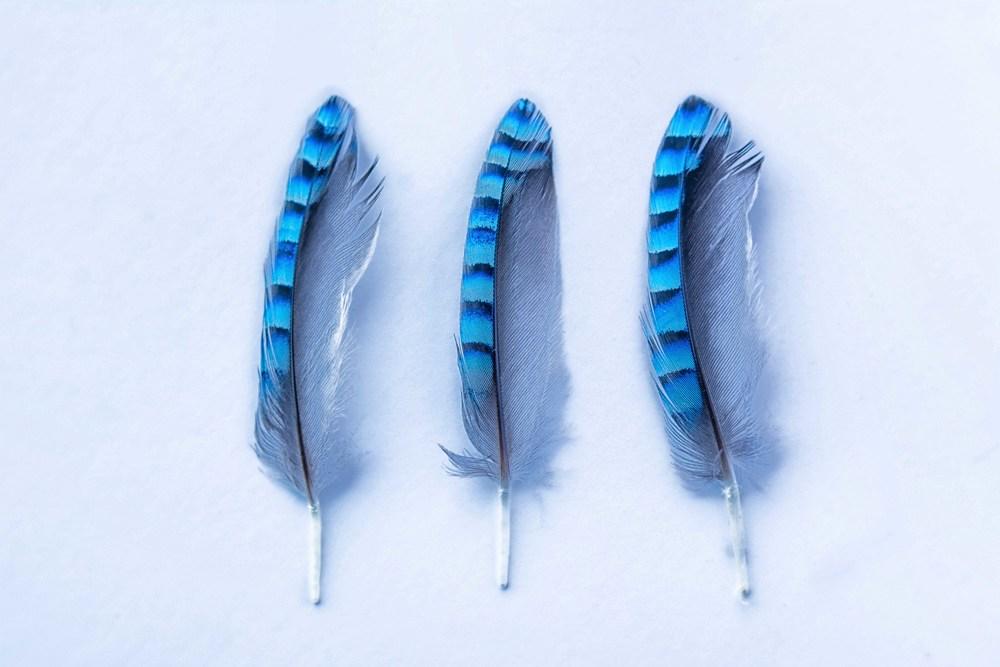 feathers sm.jpg