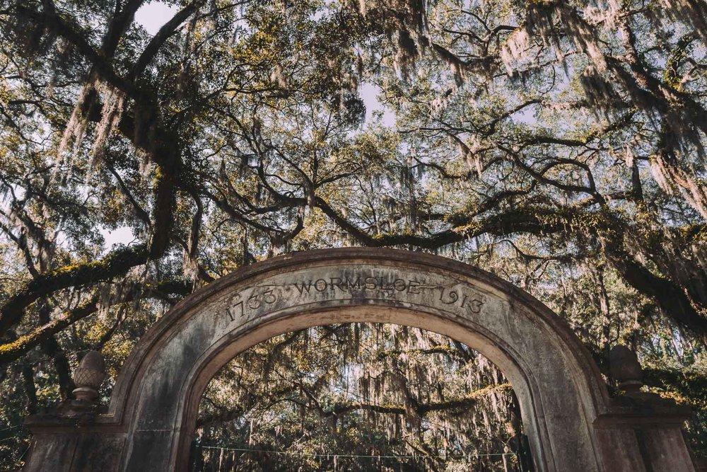 savannah_forblog-24.jpg