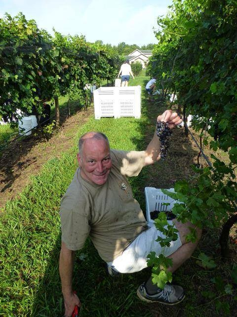 Our own John Drees picks grapes at Hazel Jean -- located right in the Piedmont!