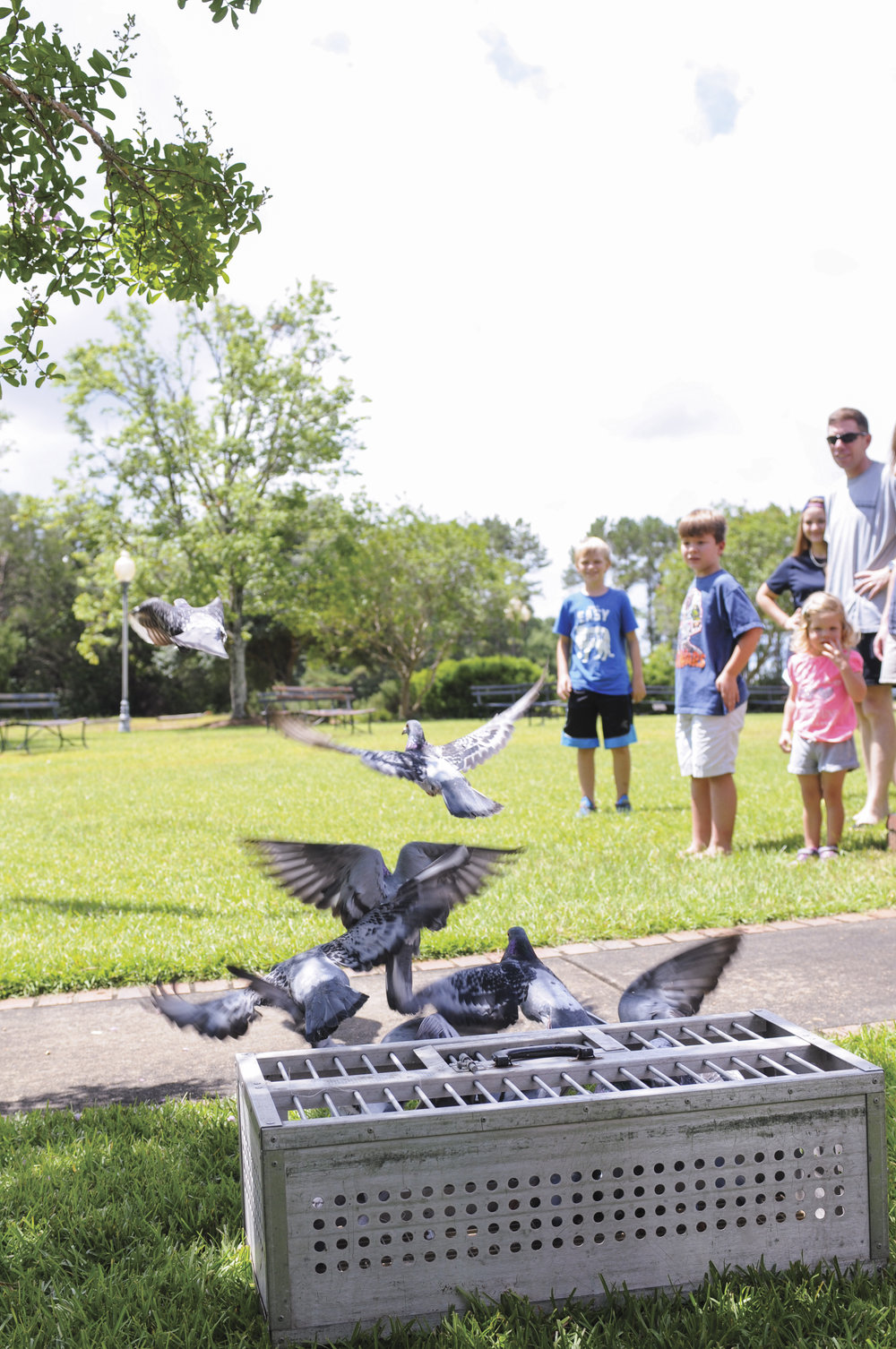 Homing Pigeons, Wiregrass Living Magazine, SO16