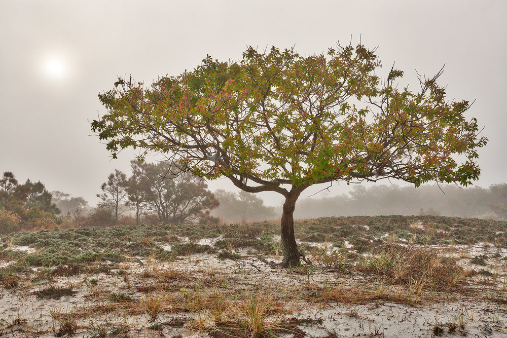 stockvault-glowing-mist-of-assateague-island---hdr228969 Nicolas Raymond.jpg